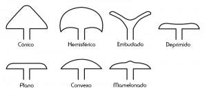 14 forma sombrero
